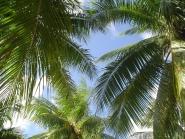 Jamaica / Bucht von Ocho Rios / Karibik