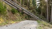 entwurzelte Fichten, Bäume liegen über einem Forstweg / Patscherkofel, Tirol, Austria