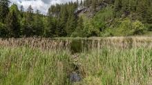 Seerosenweiher, Lans, Tirol Austria / Schilf, Seerosen