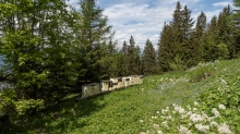 Bienenstock / Patscherkofel, Tirol, Austria
