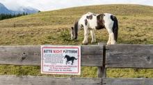 Pferdeweide / Pferde bitte nicht füttern