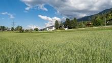 Weizenfeld / Igls, Innsbruck, Tirol, Austria