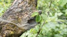 Spinnennetz am Baum, Baumstamm