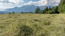 Heu auf einem Feld, Heumahd / Tirol, Austria