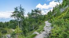 Zirbenweg, Patscherkofel, Tirol, Austria