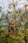 Baumpflege / Baumfäller, Baumpfleger bei der Arbeit