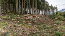 Waldrodung, forstliches Sperrgebiet / Patscherkofel, Innsbruck, Tirol, Austria