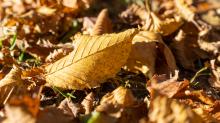Herbst in Igls, Gsetzbichl, Innsbruck, Tirol, Austria