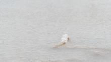Schilf im zugefrorenen See