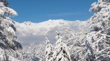 verschneite Bäume / Igls, Innsbruck, Tirol, Austria