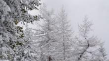 verschneite Lärchen / Patscherkofel, Tirol, Austria
