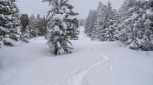 Tiefschneespur von Skifahrer durch den Wald / Patscherkofel, Tirol, Austria
