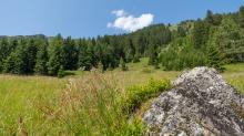 Bergwiese / Arztal, Ellbögen, Tirol, Österreich