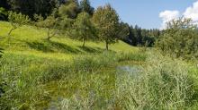 Teich in Aldrans, Tirol, Österreich