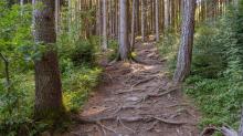 Downhill-Trail / Paschberg, Lans, Innsbruck, Tirol, Österreich
